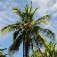 팜오일(palm oil)